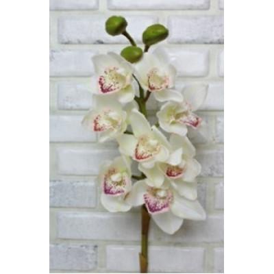 Цимбидиум (Орхидея) бел крупный 75см