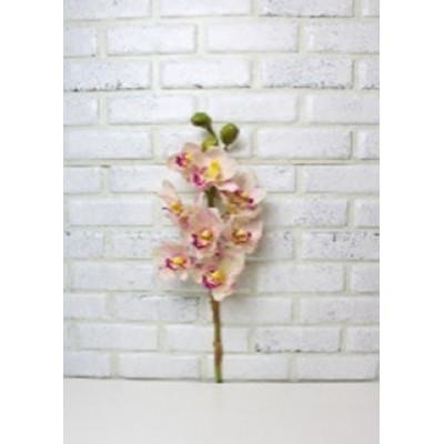 Цимбидиум (Орхидея) крем-роз крупный 75см
