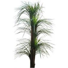 Пальма налина (ципирус) 170см