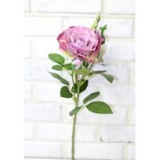 Роза кустовая круп раскр сирен 70см