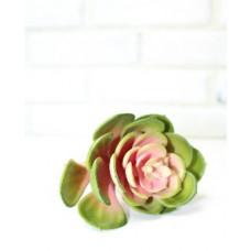 Суккулент кругл лист зелен.роз