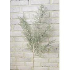 Полынь бел. стеб.высокая 100см